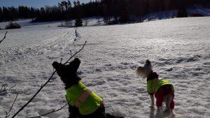 Kiss ja Riitu tarkkailevat: tuolla kelpaa juosta!